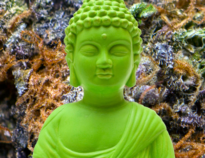 Green Buddha Guide to Growing Your Own Medicine